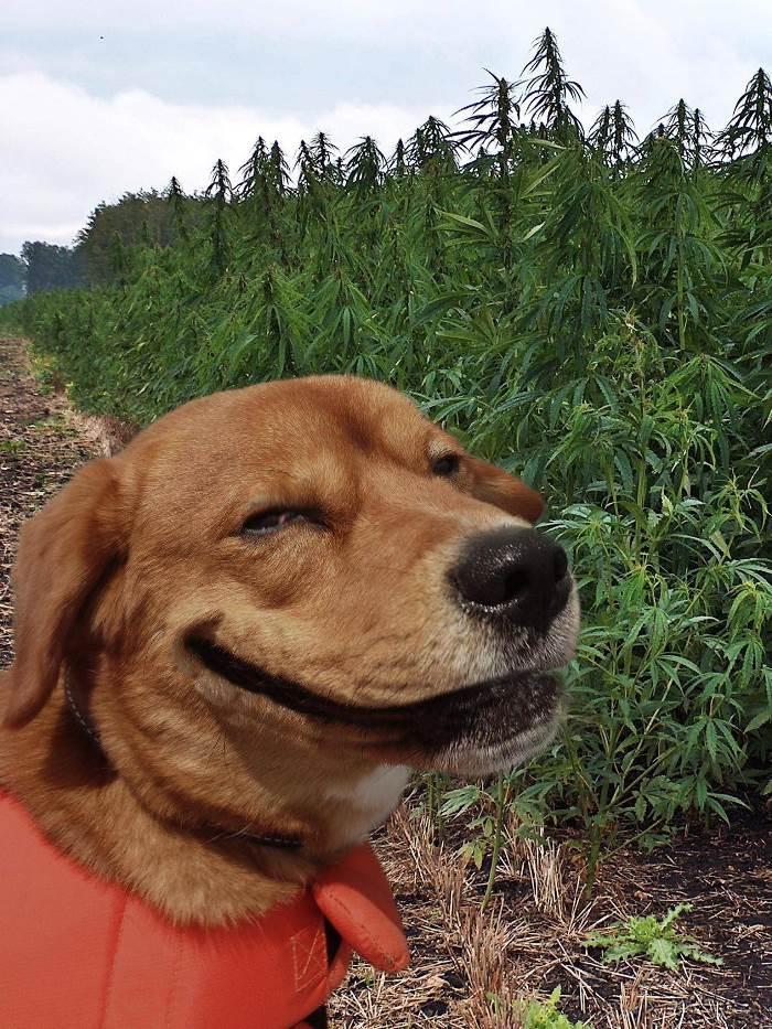 http://alligator-sunglasses.com/post/56913676562/a-happy-dog